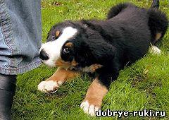 кусачий щенок