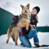 Собаки и кошки в добрые руки