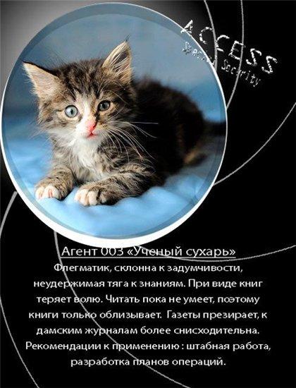 Как красиво написать объявление об отдам котенка в руки дать объявление о продаже мотоцикла